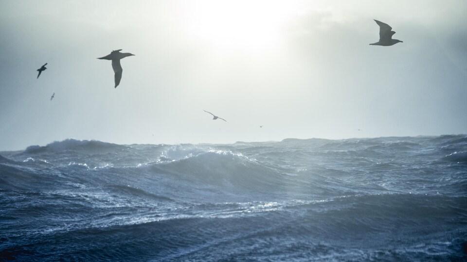 Des mouettes volent au-dessus d'une mer très agitée.