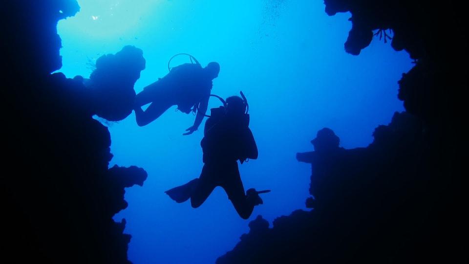Des plongeurs explorent le fond de la mer.