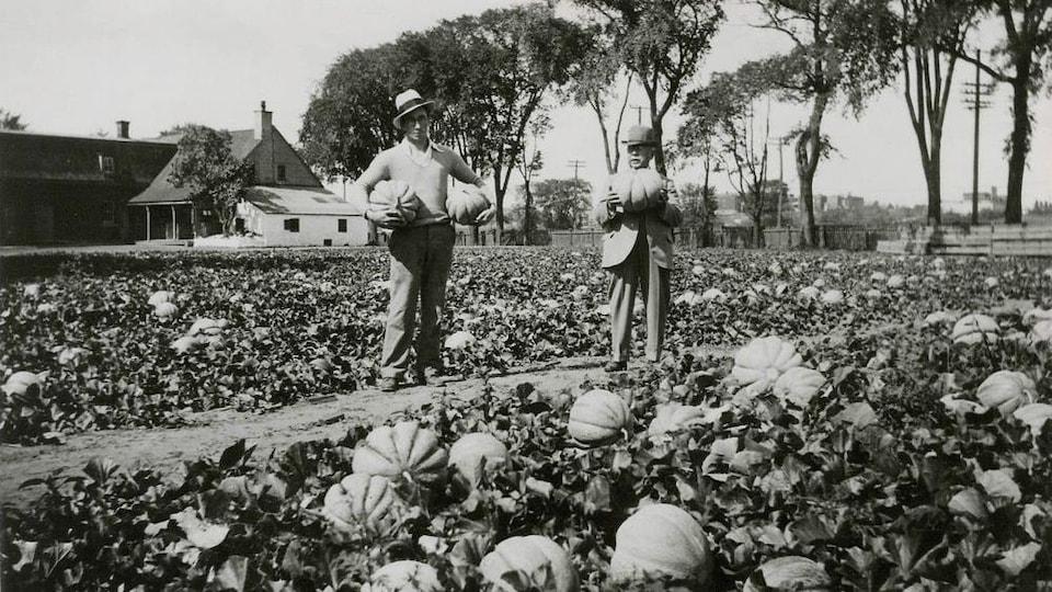 Un fermier tient dans ses mains des melons de Montréal en 1925