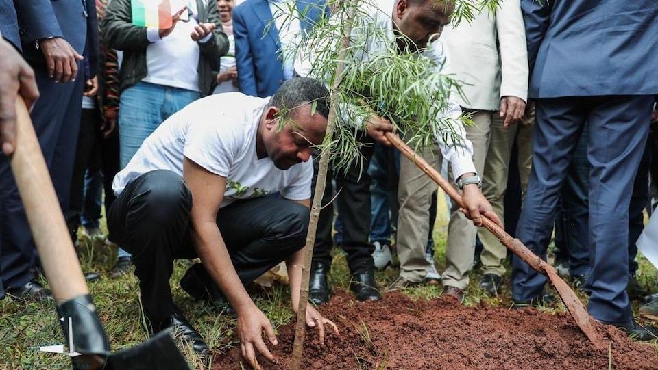 Le premier ministre éthiopien Abiy Ahmed accroupi, plantant un arbre, avec des hommes en arrière plan.