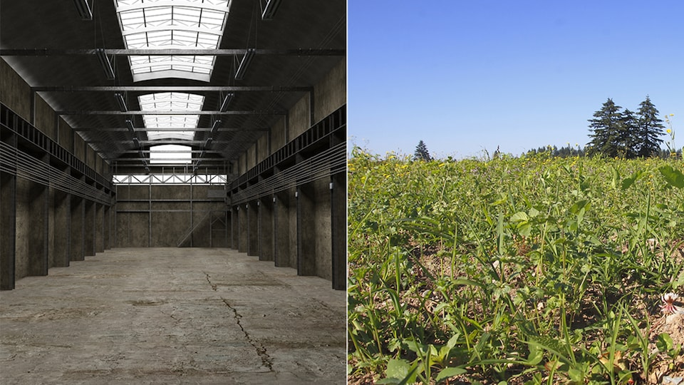 Une usine abandonnée et des mauvaises herbes qui poussent dans un champ