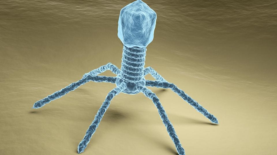 Représentation en trois dimensions d'un virus bactériophage.