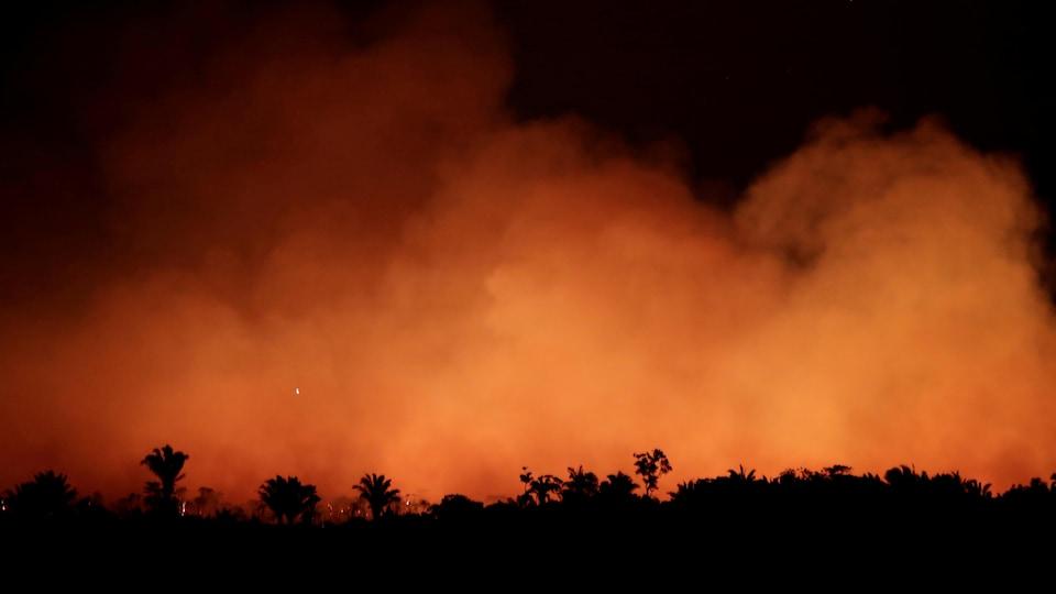 Une forêt amazonienne est la proie des flammes.