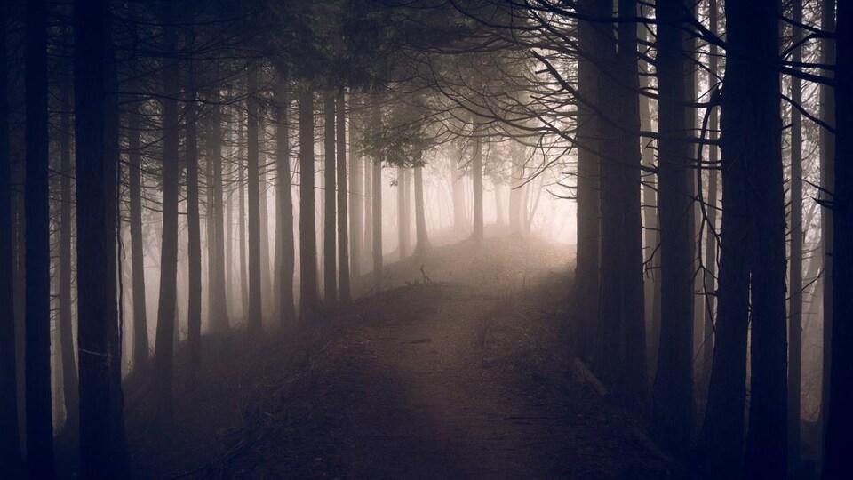 Un sentier sinueux passe dans une sombre forêt de conifères.