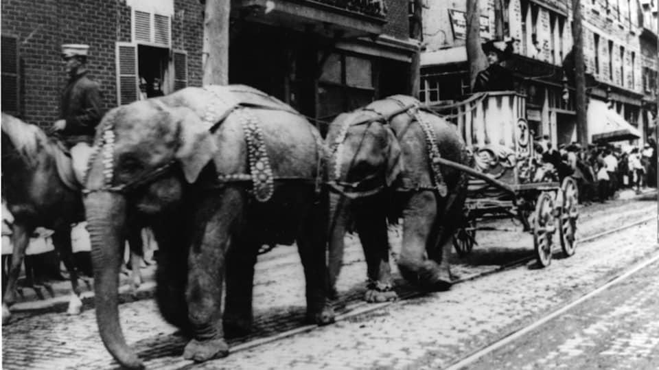 Deux éléphants tirant un char de cirque dans la rue.