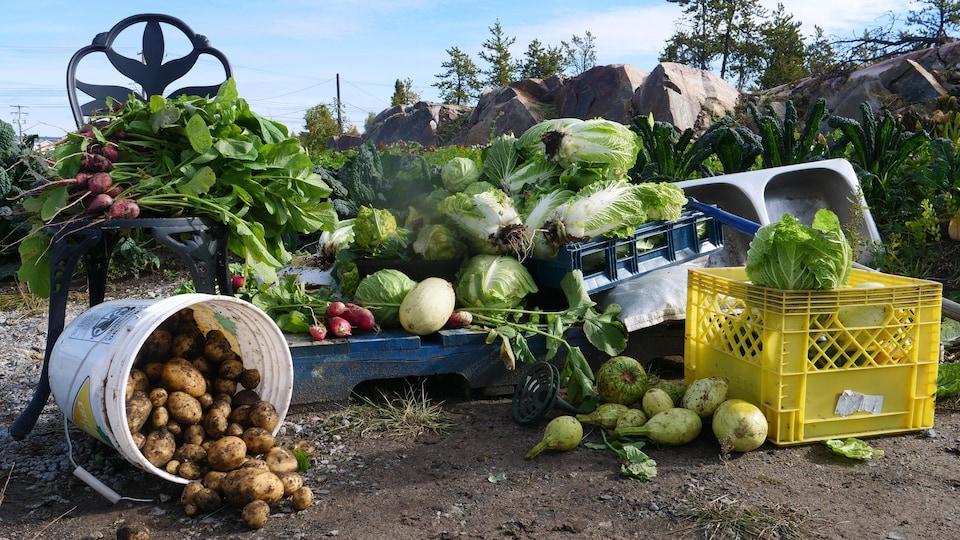 Pommes de terre, salades, radis, courges, choux et autres légumes disposés par terre dans un jardin.