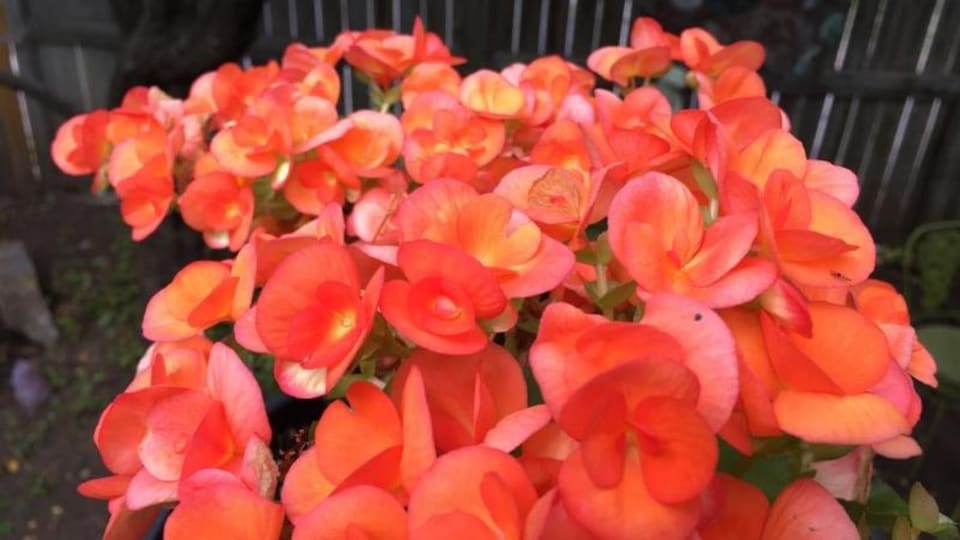Gros plan sur les belles fleurs rouges du bouquet.