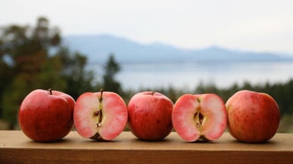 des pommes posées sur une table, face à la vue.