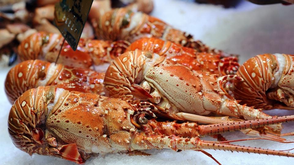 Le Nouveau-Brunswick a développé une importante activité économique liée au homard.