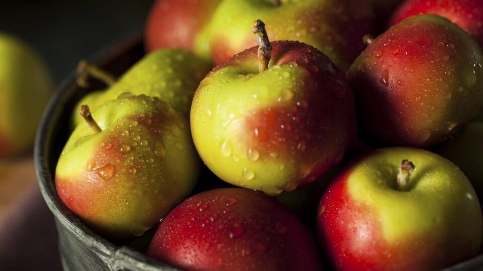 Des pommes dans un seau en métal.