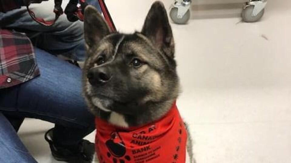 Un chien assis portant un bandeau au cou.
