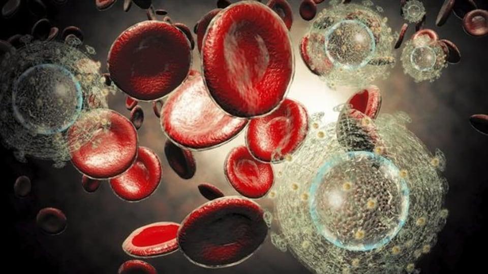 Illustration du VIH dans le flux sanguin.