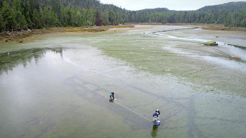 Vue de hauteur de trois scientifiques qui procèdent à une collecte d'échantillons d'herbiers marins dans une baie peu profonde