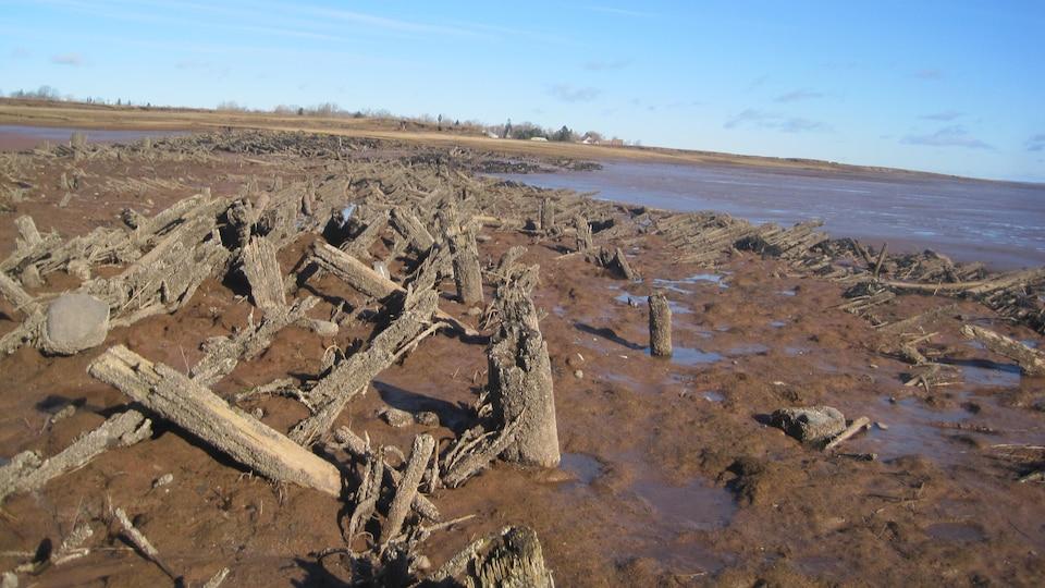 L'amas de terre, d'arbres et de branches qui constitue la digue.