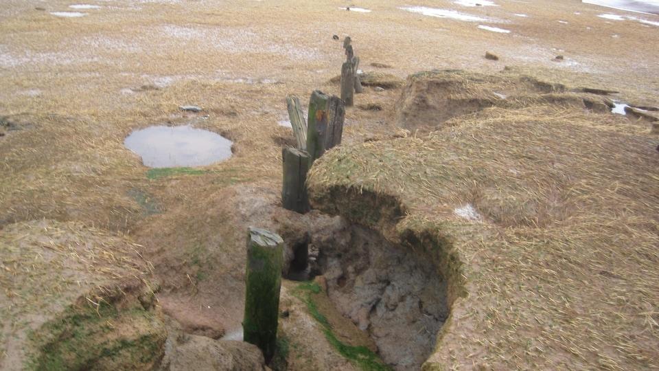 Les restes d'une structure en bois dans un marais.