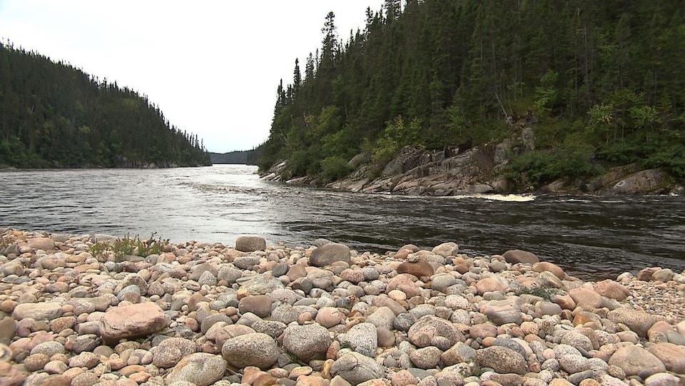 La rivière Moisie entourée d'arbres.