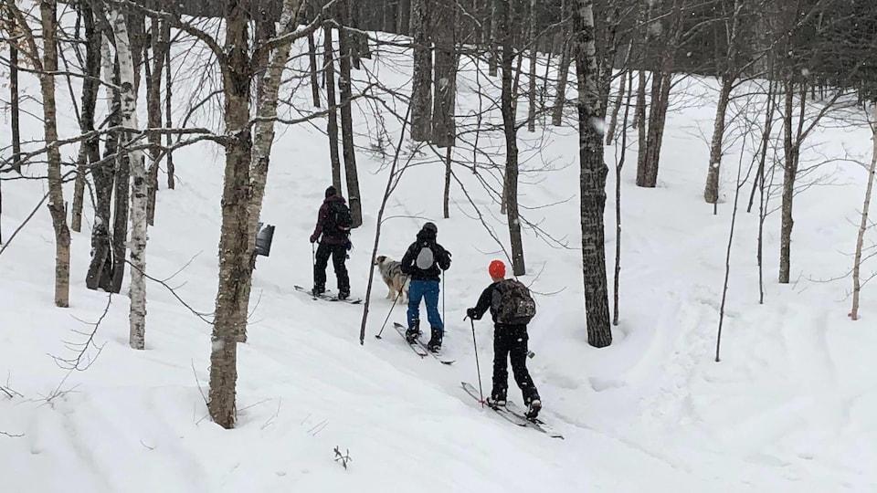 Trois skieurs en train de gravir une pente boisée.