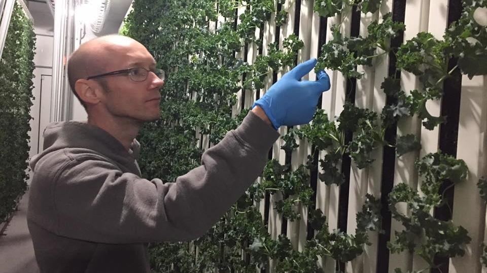 Stéphane Lanteigne devant un mur de chou frisé à l'une de ses fermes hydroponiques.