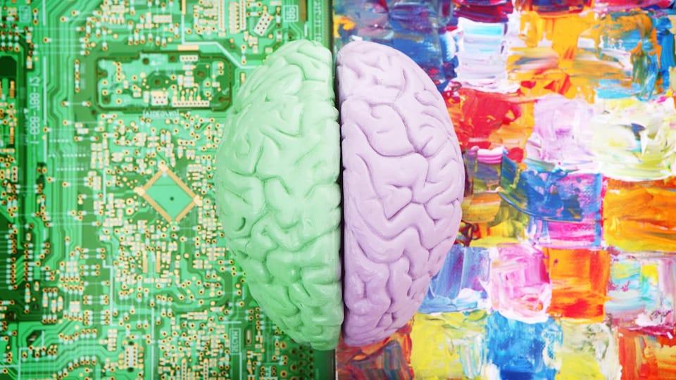 Un cerveau coupé en deux qui représente les hémisphères.