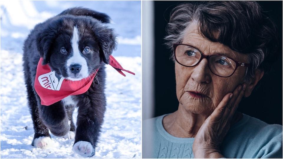 Un chien et une femme qui réfléchit.