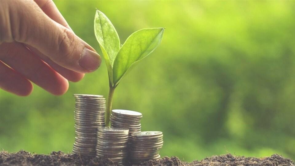 Une plante en train de germer au travers de pièces de monnaie.