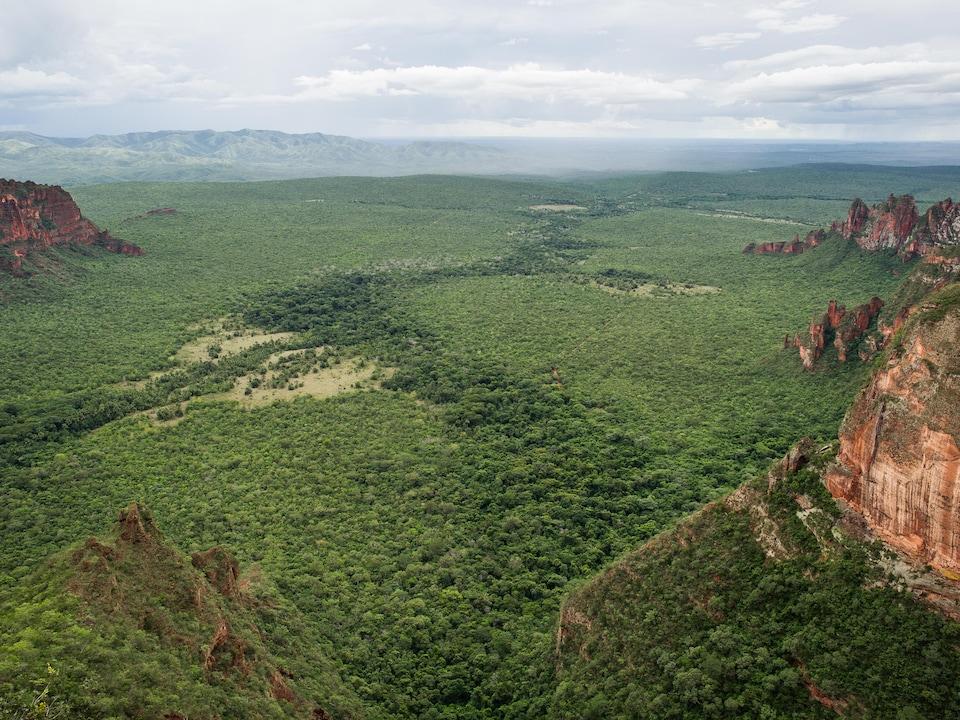 Vue aérienne de la forêt amazonienne brésilienne.