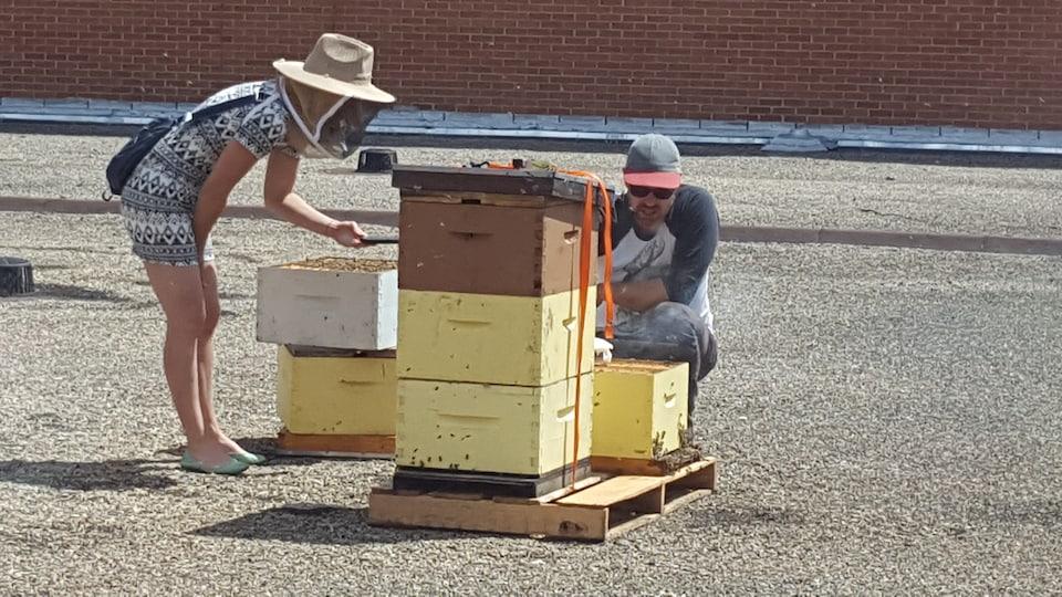 Un apiculteur explique les soins à apporter aux abeilles urbaines.