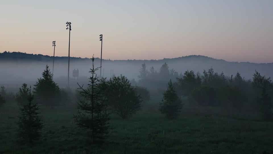 Des arbres enveloppés de brume
