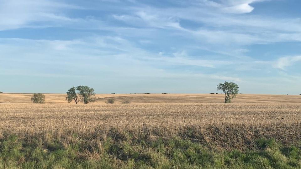 Un champs sous un ciel dégagé