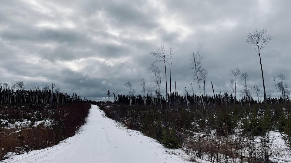 Une route à travers un chantier forestier où les arbres repoussent.