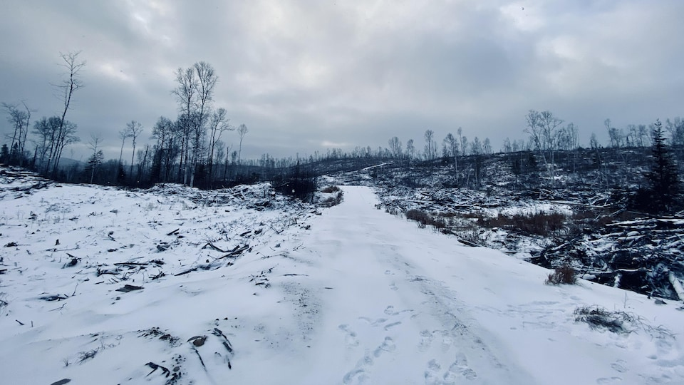 Un chemin forestier