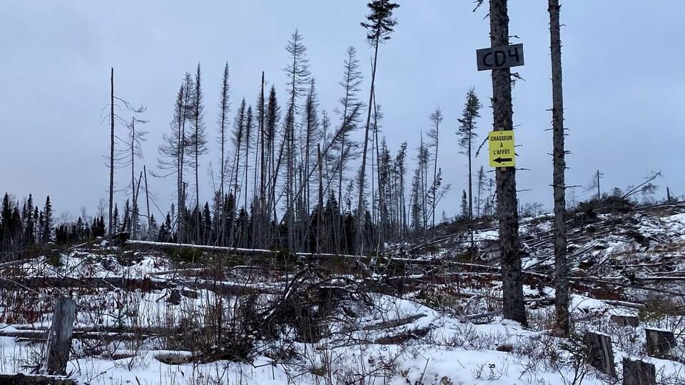 Une forêt rasée où il ne reste que quelques arbres.