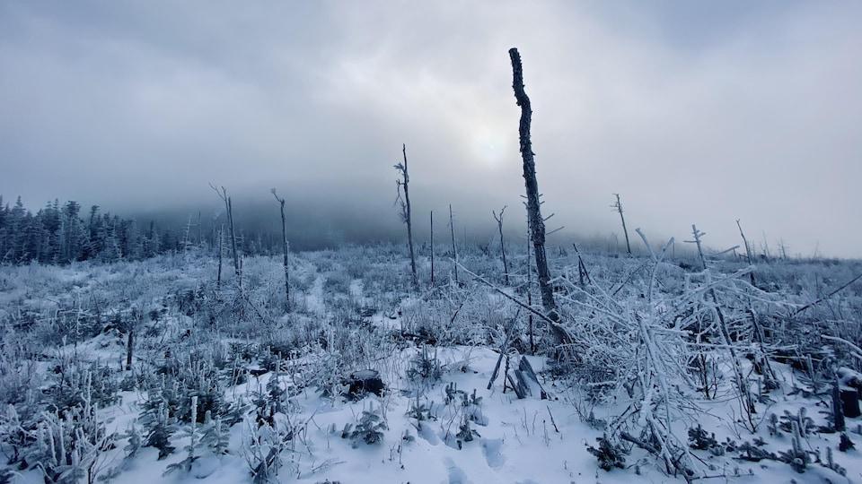 Un ancien chantier où la forêt a subi une coupe totale.