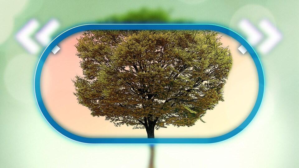 Illustration d'un grand arbre.