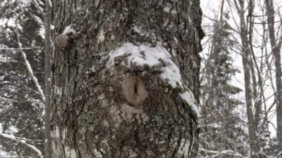 L'écorce d'un arbre.