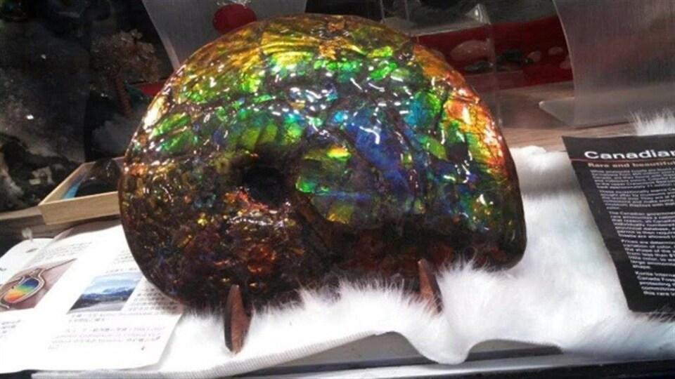 Un fossile aux couleurs irisées et chatoyantes est exposé sur un présentoir.