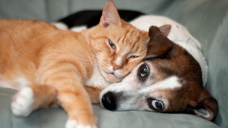 Un chat s'est couché sur un chien. Les deux regardent l'objectif de la caméra.