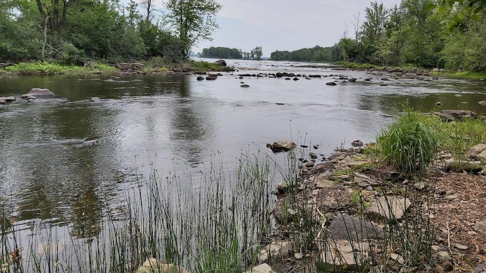 Un bord de cours d'eau.