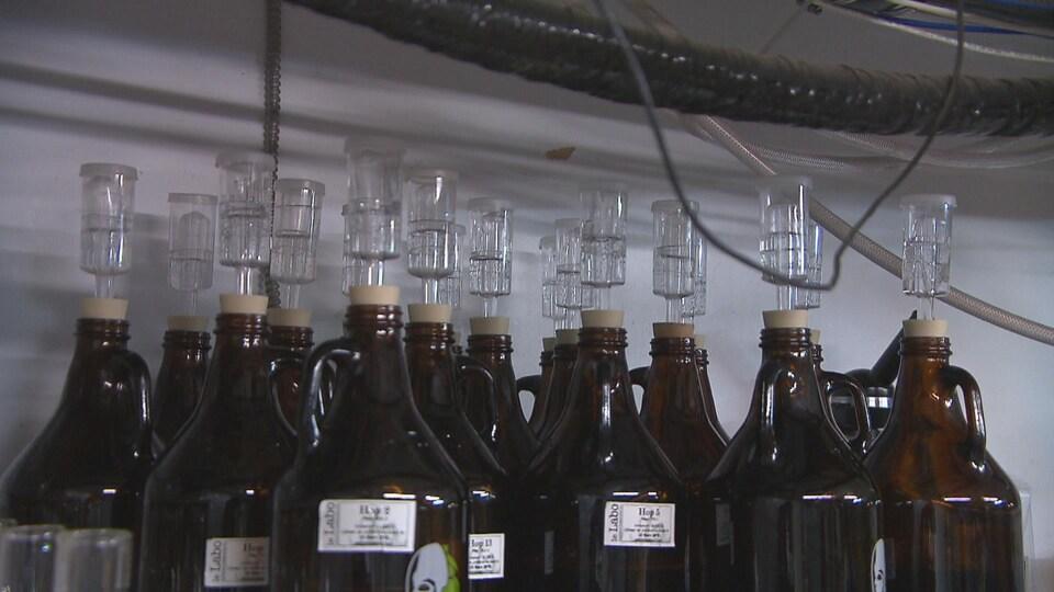 Des bouteilles où fermentent les souches de levure