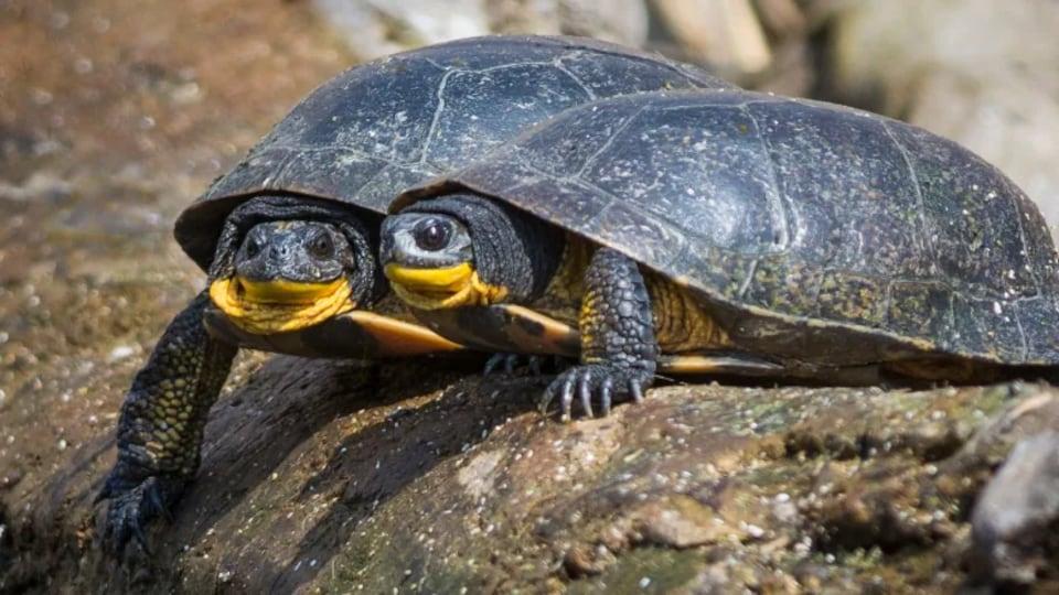 Deux tortues.