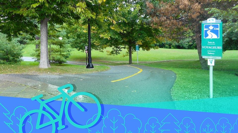 Un sentier asphalté dans un parc avec plusieurs arbres.