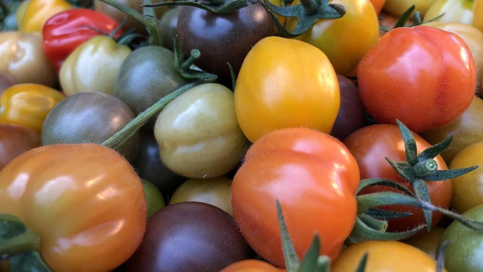 Des tomates.