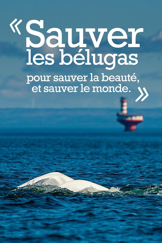 Sauver les bélugas pour sauver la beauté, et sauver le monde