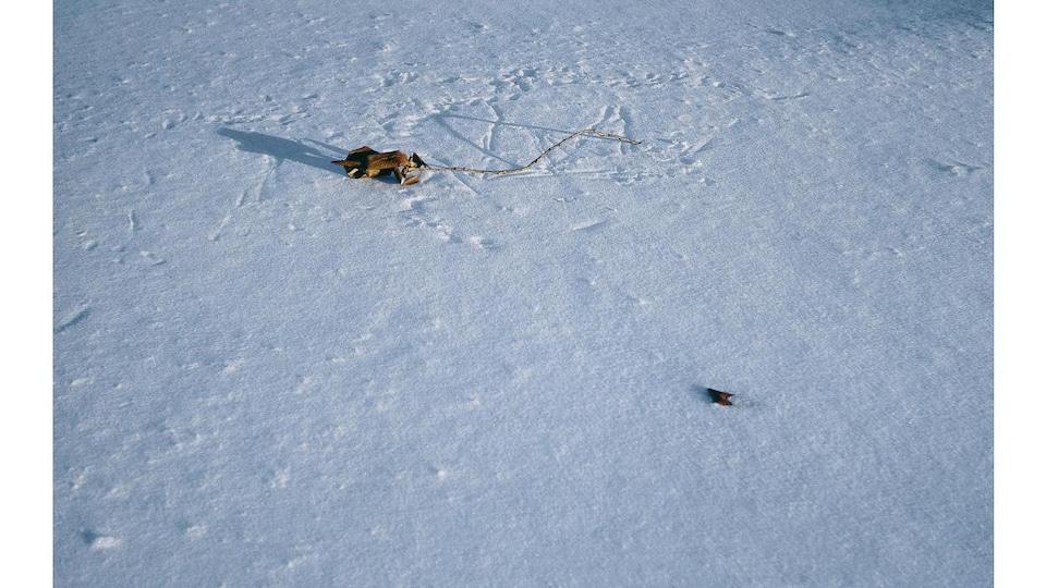 Une photo montrant une étendue de neige avec une branche d'arbre isolée.
