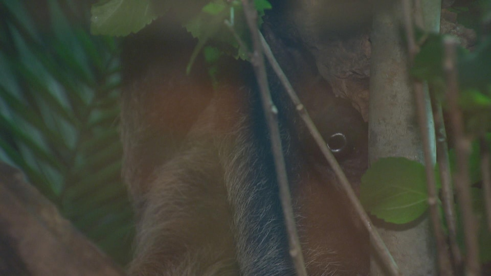 L'animal est perché dans un arbre.