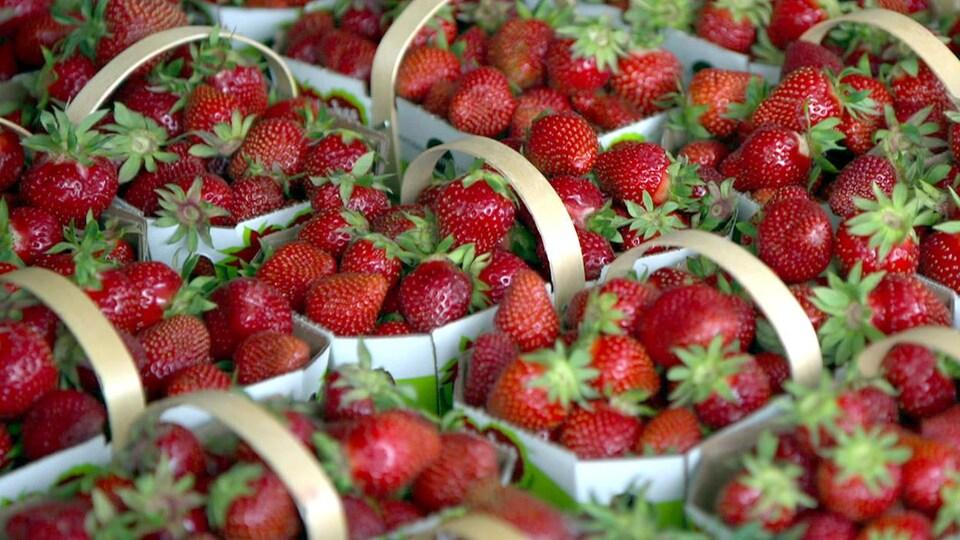 Des paniers de fraises.