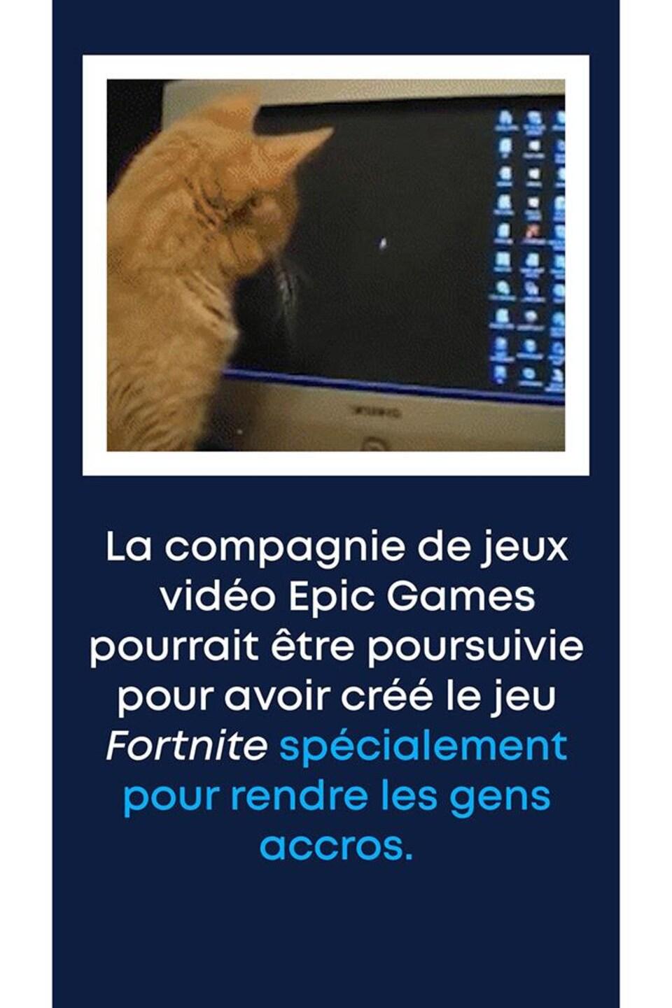 Image: un chat fixe le pointeur de la souris sur un écran d'ordinateur. Texte: « La compagnie de jeux vidéo Epic Games pourrait être poursuivie pour avoir créé le jeu Fortnite spécialement pour rendre les gens accros. »