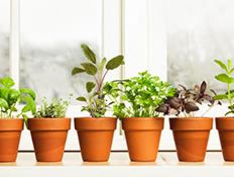 Des pots contenant des plantes sont déposés près d'une fenêtre lumineuse.