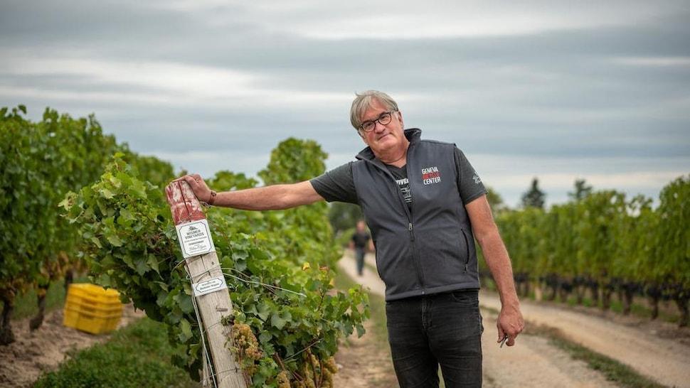 Le vigneron se tient debout dans un vignoble pendant les vendanges.