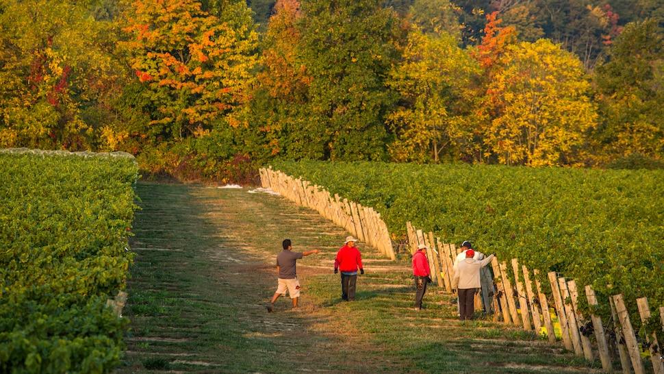 5 hommes se tiennent debout dans le vignoble en automne.